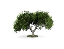 white background and tree Stock Images