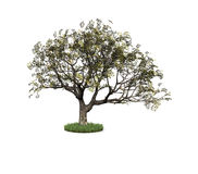 white background and tree Royalty Free Stock Images