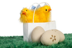 White bag with baby chickens Stock Photo