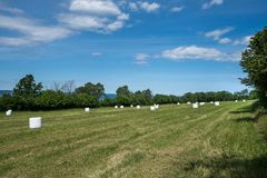 White bales of wrapped hay on a field in Sweden stock photography