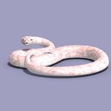 White ball python. 3D rendering of a white ball python with clipping path and shadow over white Stock Photos