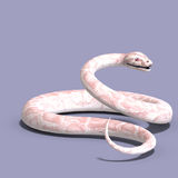 White ball python. 3D rendering of a white ball python with clipping path and shadow over white Stock Photography