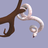 White ball python. 3D rendering of a white ball python with clipping path and shadow over white Stock Photo