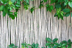 White bamboo fence texture background with green grape leaves Stock Photo