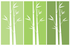 White bamboo green background Stock Photography