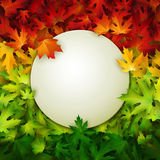 White banner on colorful autumn leaves background, vector illustration Royalty Free Stock Image