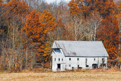 White Barn and Autumn Leaves Royalty Free Stock Photos