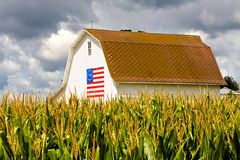White Barn With Centennial Flag. Mature corn under cloudy skies, and white barn with American centennial flag painted on the side Royalty Free Stock Photo