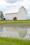 White Barn and Flooded Cornfield Royalty Free Stock Photo