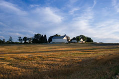 White barn with golden field and blue sky with white clouds Royalty Free Stock Photo