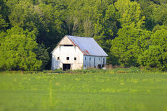 White barn in rural Indiana Royalty Free Stock Image