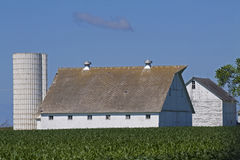 White Barns Royalty Free Stock Photos