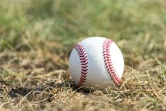 A white baseball on the green grass royalty free stock photography