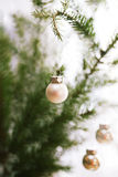 White bauble hanging. Christmas decoration - white baubles and green branches Stock Images