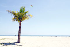 The white beach. Stock Photography