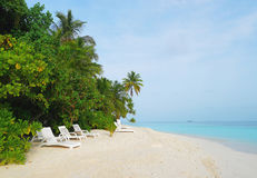White beach chairs on sand beach of tropical island under coconut and palm trees. Sand is white. Sky is blue. stock image