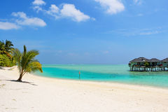 White beach with coconut palms and water bungalows on the Maldives Royalty Free Stock Photos