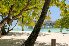 White beach with coconut palms and water bungalows on the Maldives Royalty Free Stock Image