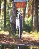 White Beach Cruiser Bicycle Parked Beside Brown Tree Royalty Free Stock Photography