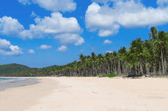 White beach and palm trees. Endless white beach with palm trees. Philippines Stock Photos