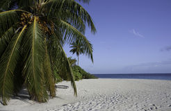 White Beach, Pam tree, Blue Sky, Ocean, Maldives Stock Image