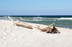 White beach and tree trunk Stock Photography