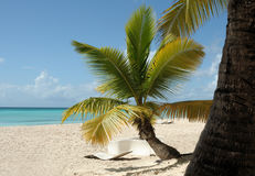 The white beaches of the Dominican Republic. View of the white sand and blue ocean through the leaves of palm trees. Stock Photography