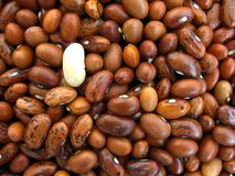 White bean among brown beans. Conceptual image Royalty Free Stock Photo