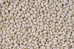 White-beans Royalty Free Stock Images