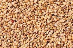White beans background Royalty Free Stock Photo