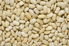 White beans background Stock Photography
