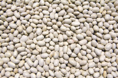 White beans. Close-up high resolution texture Stock Images