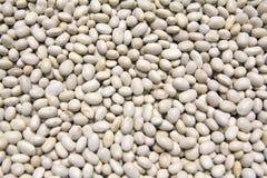 White beans stock images