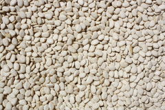 White beans exposed in sunlight Royalty Free Stock Photography