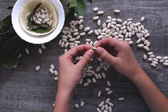 White beans and female hands symbolize healthy eating. Healthy food royalty free stock images