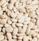 White beans Royalty Free Stock Photos