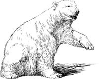 White bear Royalty Free Stock Photography
