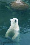 White bear Royalty Free Stock Image