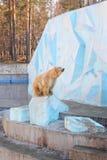 White bear. Big white bear in the zoo stock photos