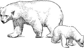 White bear with cub Stock Image