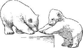 Free White Bear Cubs Stock Photo - 37753140