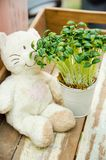 White bear doll with tree pot. On wooden royalty free stock image