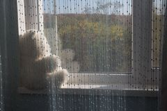 White bear sits on the windowsill and looks out the window, waiting. present. sad childhood stock photo