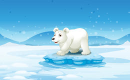A white bear standing above the iceberg Stock Photo