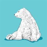 White bear. Royalty Free Stock Image
