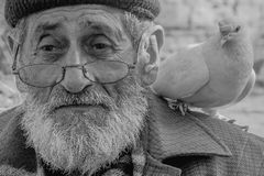 White Bearded Grandfather and Pigeons friendly. Royalty Free Stock Photos