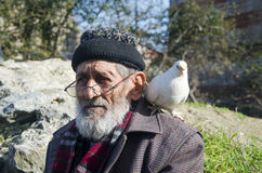 White Bearded Grandfather and Pigeons friendly. Royalty Free Stock Photo