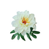 White beautiful artificial flower isolate on white Stock Images