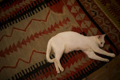 White beautiful cat in retro carpet! Royalty Free Stock Photo