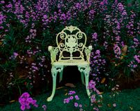 White beautiful chair with blooming purple flowers at the background royalty free stock photos